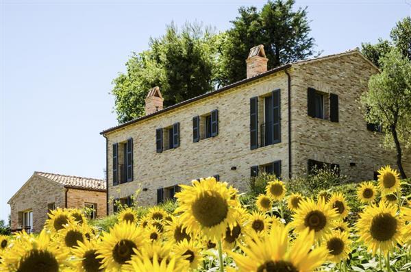 I Girasoli in Provincia di Ancona