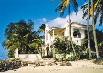 Indigo in Barbados