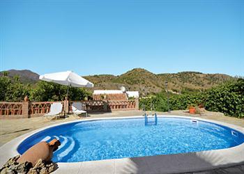 Jacaranda in Spain