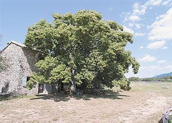 Le Tilleul du Bois de la Poussel in Provence-Alpes-Côte dAzur